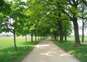 Drevored na Poti spominov in tovarištva v Ljubljani